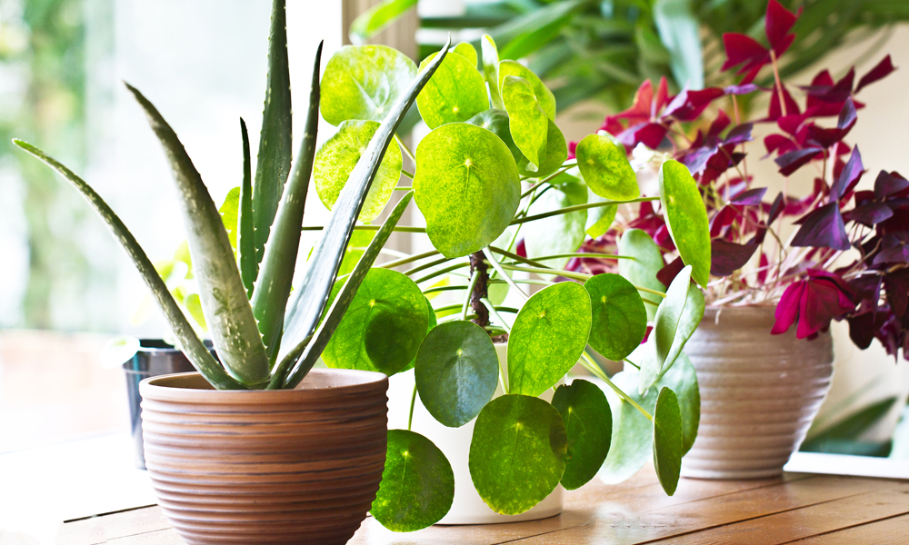 Moving House With Your Plants